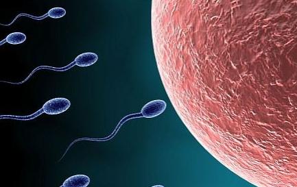 生男生女清宫图准不准?生男生女备孕方法有不少可以选择!